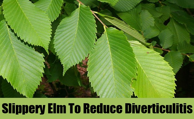 Slippery Elm To Reduce Diverticulitis