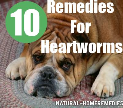 Natural Remedy For Heartworms