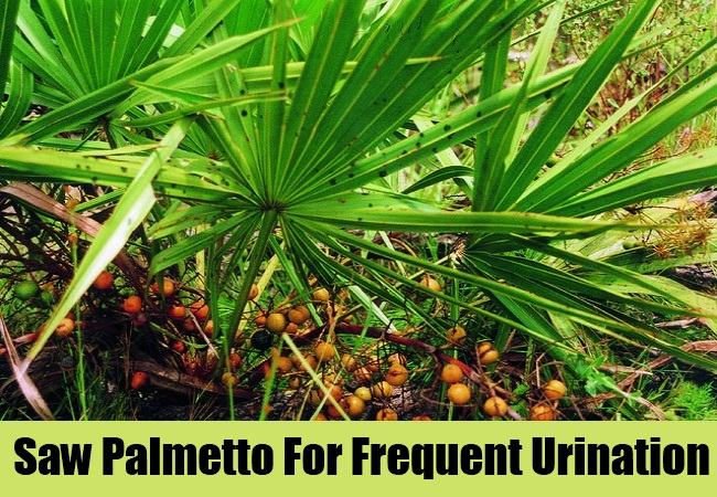 Saw Palmetto For Frequent Urination