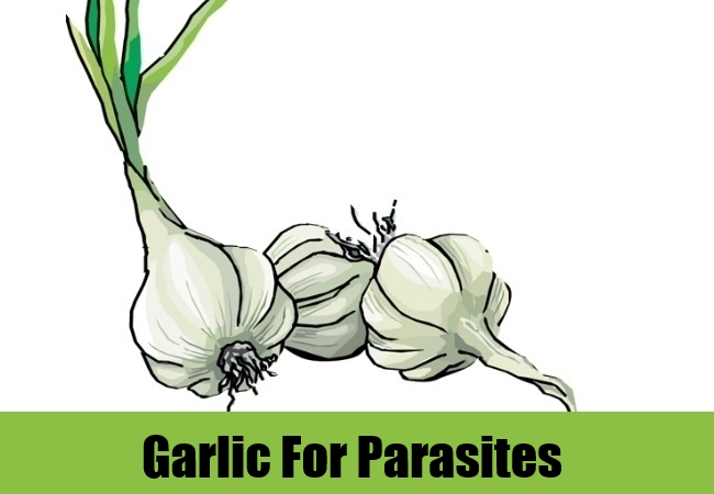 Garlic For Parasites