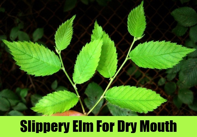 Slippery Elm For Dry Mouth
