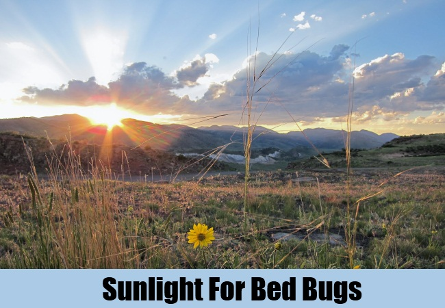 Sunlight For Bed Bugs
