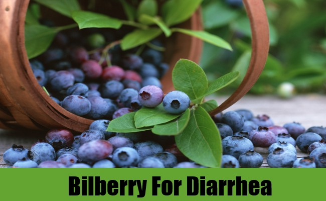 Bilberry For Diarrhea