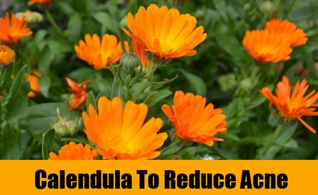 Calendula To Reduce Acne
