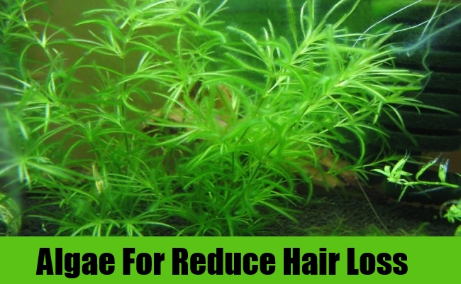Algae For Reduce Hair Loss