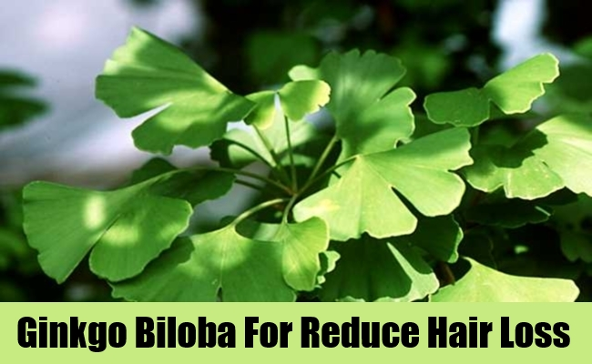 Ginkgo Biloba For Reduce Hair Loss