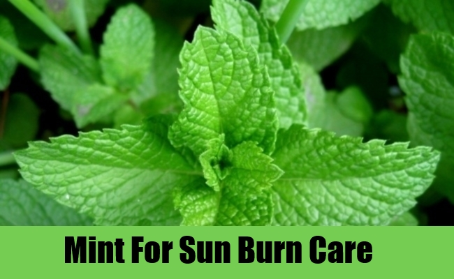 Mint For Sun Burn Care