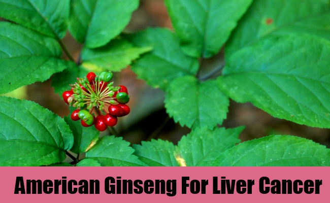 American Ginseng For Liver Cancer