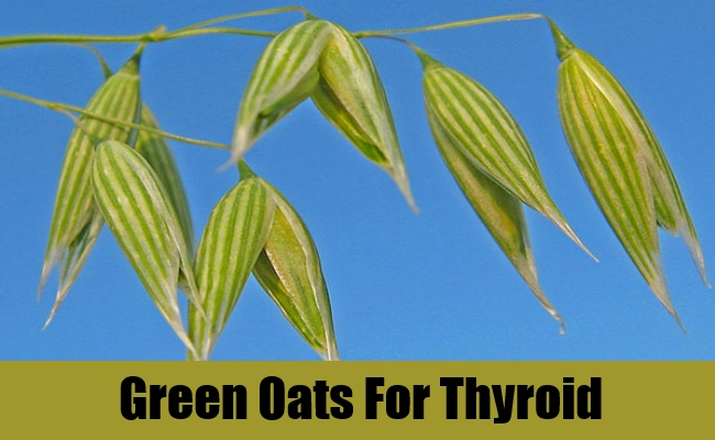 Green Oats For Thyroid