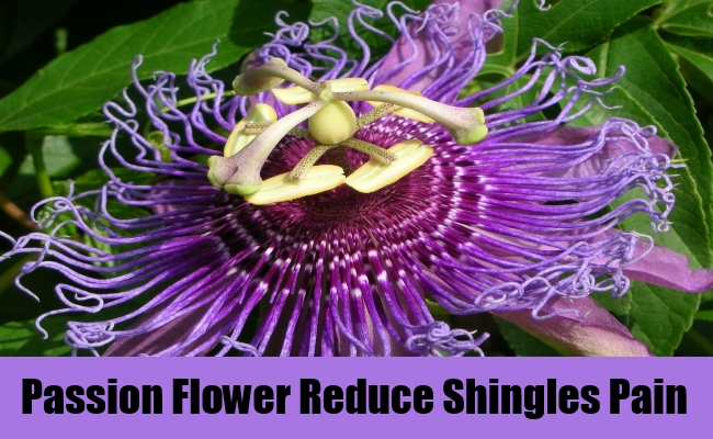 Passion Flower Reduce Shingles Pain