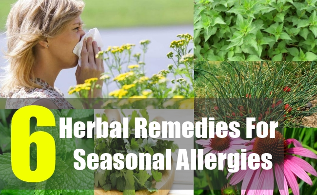 6 Herbal Remedies For Seasonal Allergies