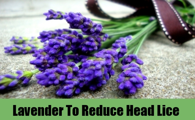 Lavender To Reduce Head Lice