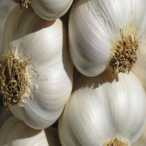 Use Of Garlic