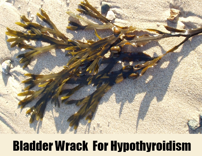 Iodine-rich bladder wrack  For Hypothyroidism