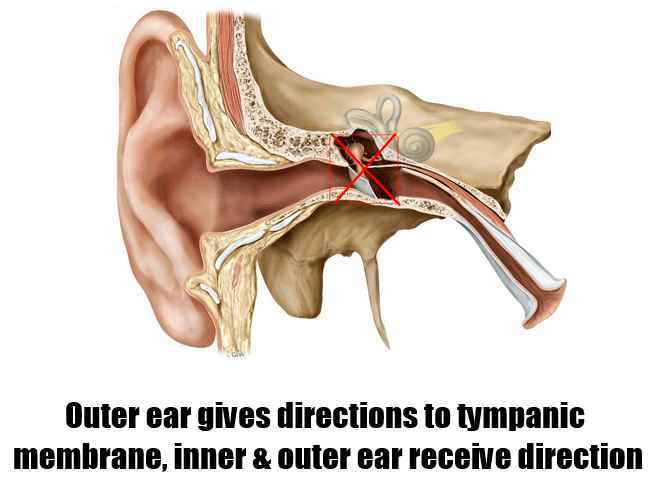 Outer Ear,Middle Ear And Inner Ear