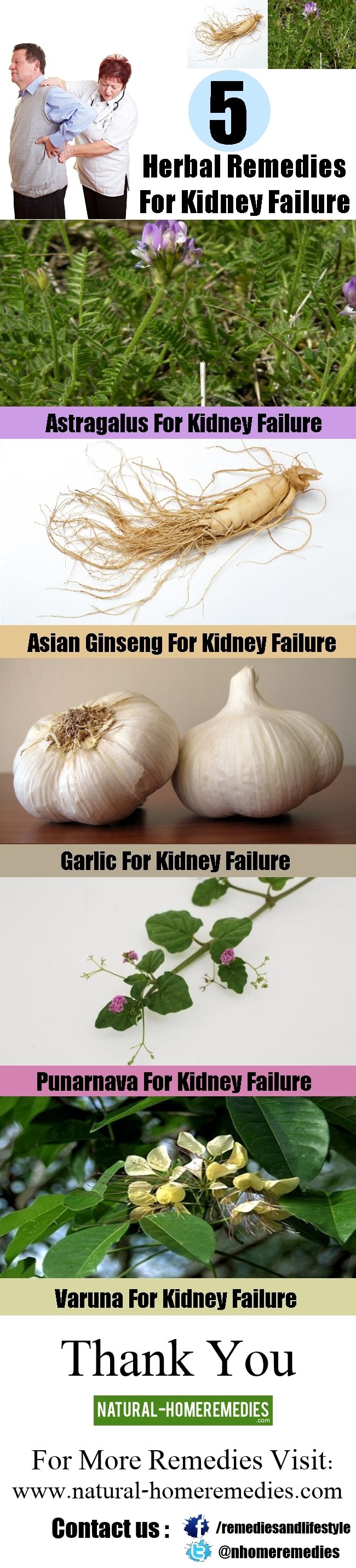 5 Herbal Remedies For Kidney Failure