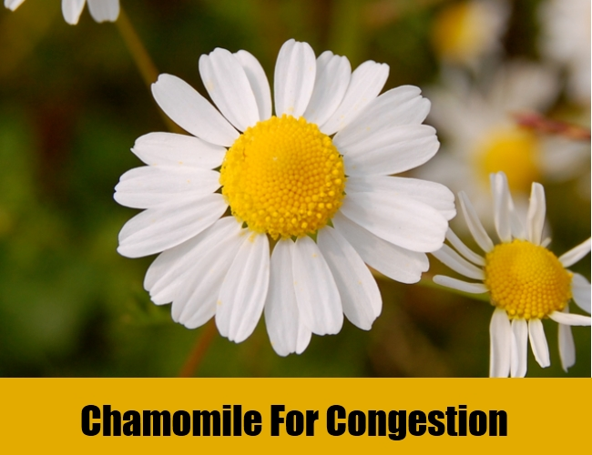 Chamomile For Congestion