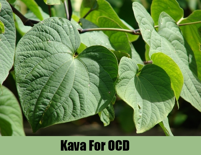 Kava-To-Cure-OCD