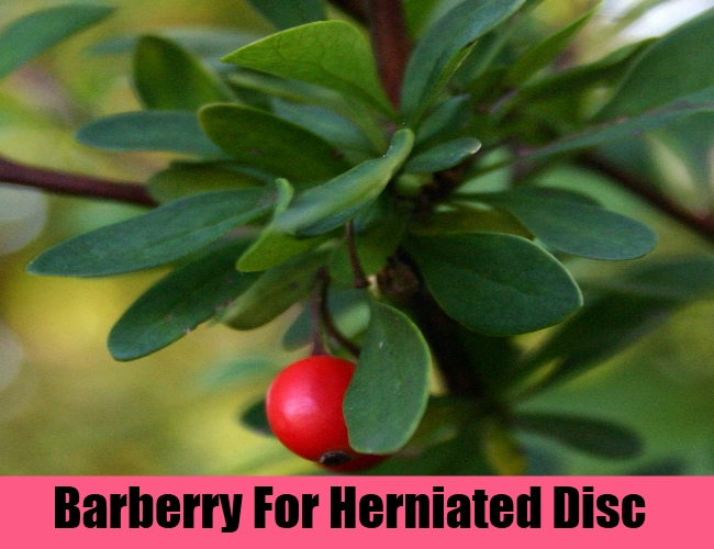 Barberry For Herniated Disc
