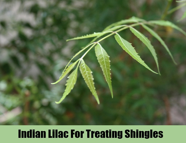 Indian Lilac For Treating Shingles