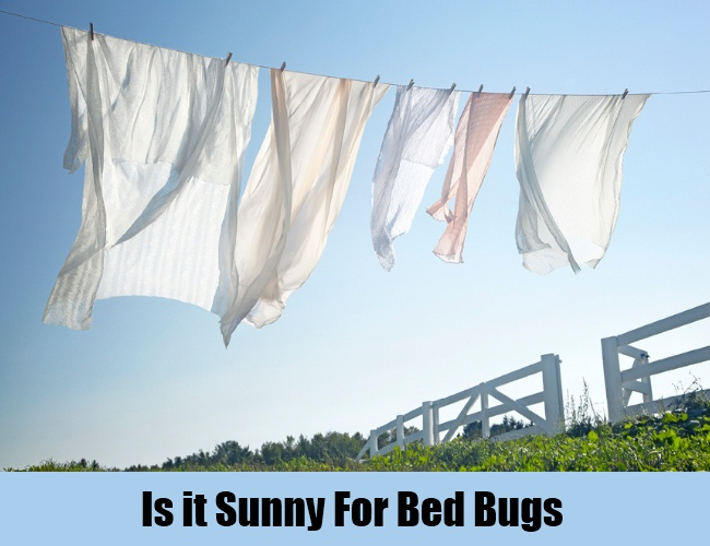 Is it Sunny For Bed Bugs