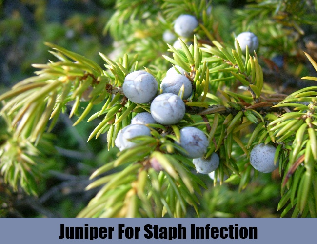 Juniper For Staph Infection