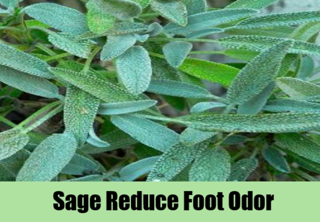 Sage Reduve Foot Odor