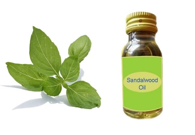 Tulsi Leaves And Sandalwood Oil