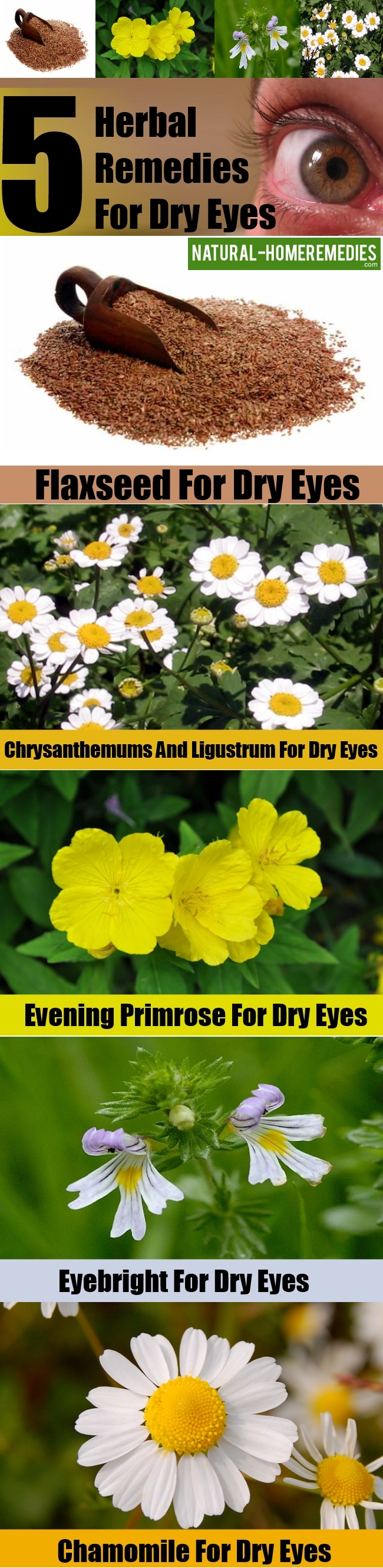 Top 5 Herbal Remedies For Dry Eyes