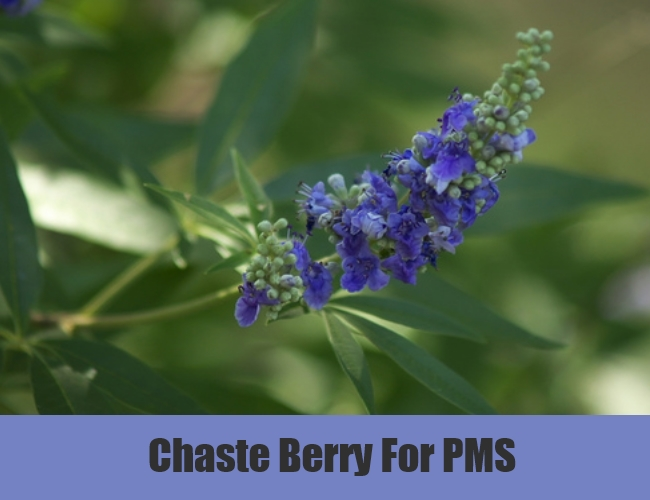 Chaste Berry For PMS