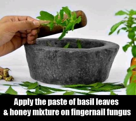 Basil And Honey To Cure Fungal Infection