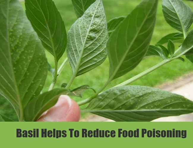 Basil Helps To Reduce Food Poisoning