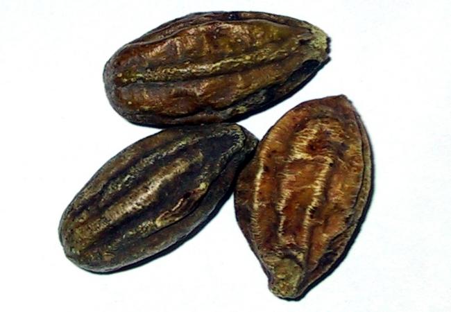 Chebulic Myroblan
