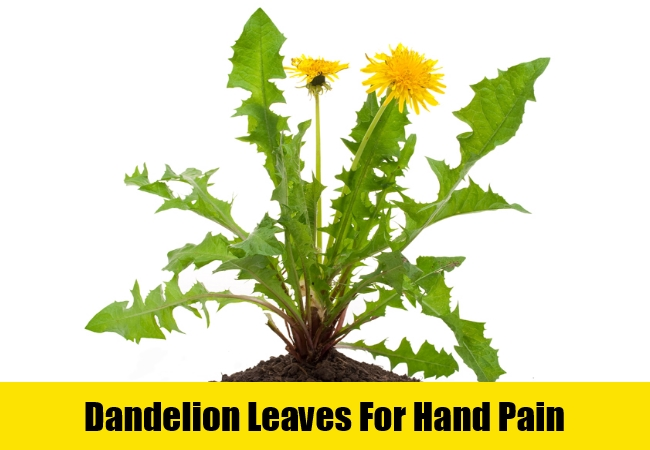 Dandelion Leaves