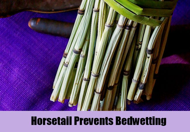 Horsetail Prevents Bedwetting