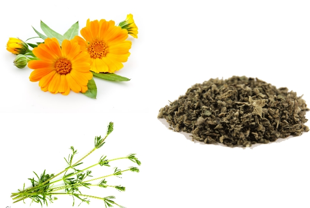 Calendula and Cleavers Infusion for Lymph Cleansing