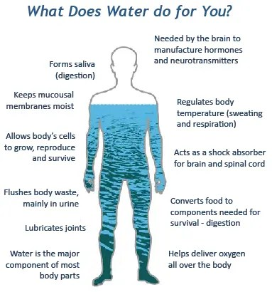 What water does for you - Hydration