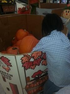 Pumpkin Digging