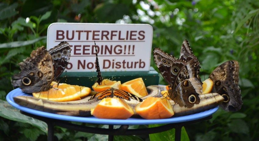 """""""Butterfly Conservatory"""" """"Canada"""" """"Family Travel"""" """"Niagara State Park"""""""