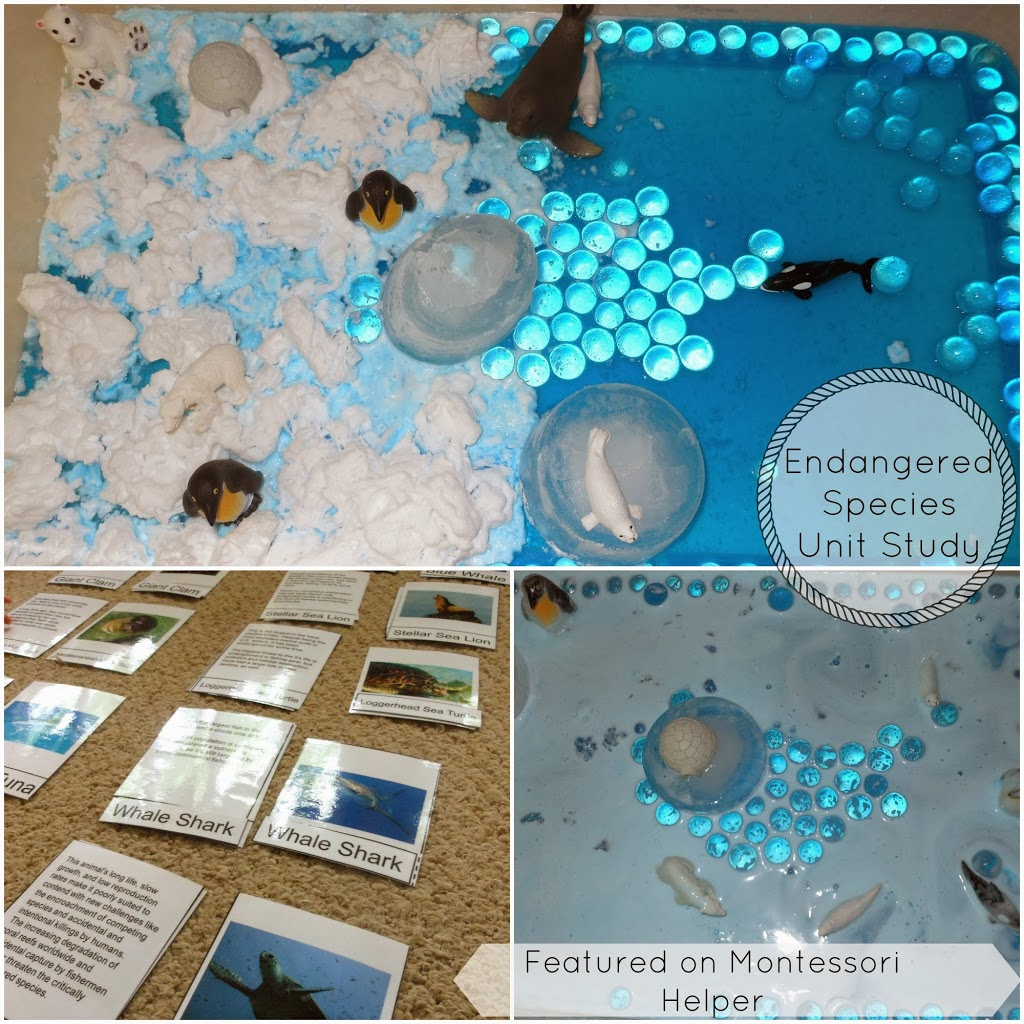 Under The Sea Activities