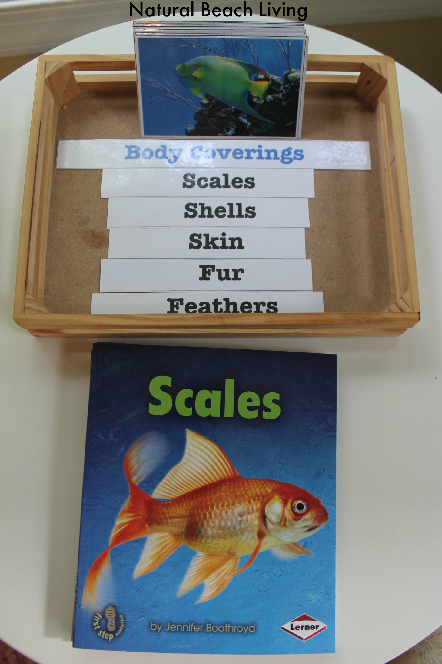 Montessori Inspired Zoology Body Coverings Free Printables