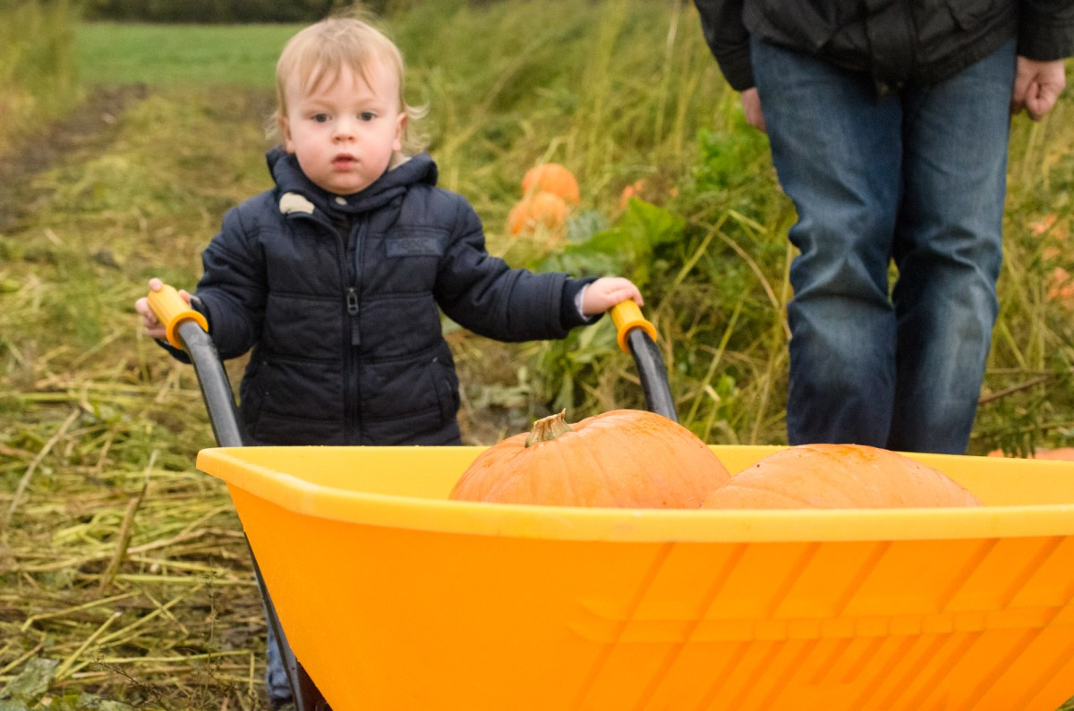 Birchfield Farm Pumpkin Festival review