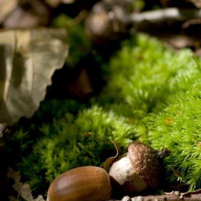 Natural Autumn Crafts