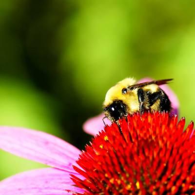 Queen Bee Facial Mask