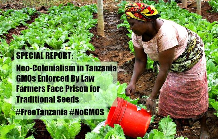 Colonialism in Tanzania, GMOs Enforced By Law, Farmers Face Prison for Traditional Seeds