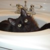 Does your cat do something quirky? Do tell!