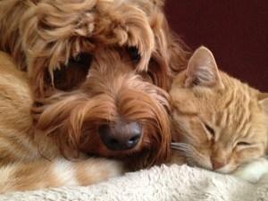 love snuggles