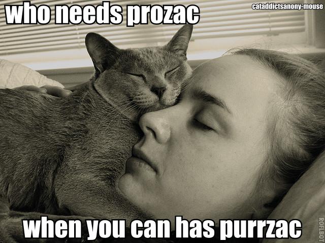 purrzac1