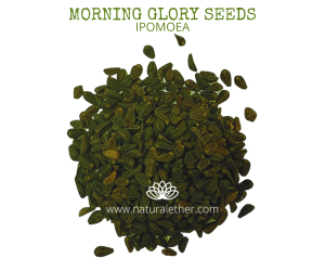 Natural Ether Website Images MORNING GLORY SEEDS 2