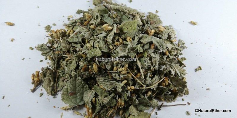 Calea Dream Herb